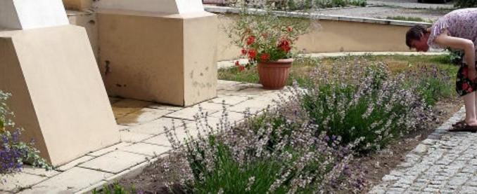 L'horticulture utilisée pour soigner les troubles psychiques