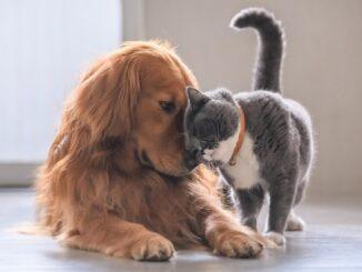 chat chien collier câlin